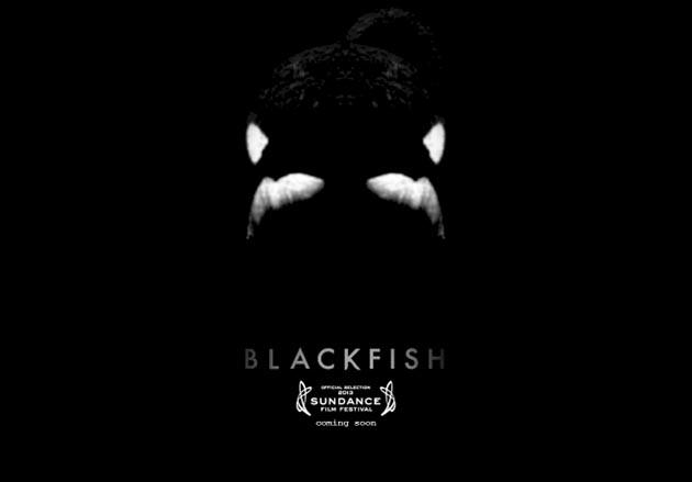 blackfish-thumb-630xauto-36453