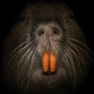 rodent3