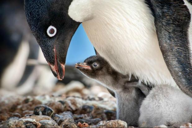 penguins1.jpeg