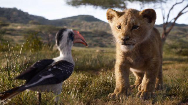 lion2.jpeg