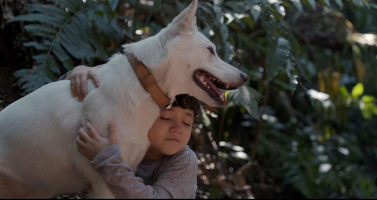 """Netflixable? Very smart dogs save the day in """"June & Kopi"""" 